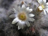 Еще цветочки и растения